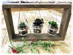 Succulent Plant Display $43